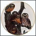 Saw Whet Owl Collector Plate by John Ruthven MAIN
