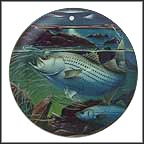 Striped Bass Collector Plate by John Eggert MAIN