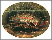 Rainbow Trout Collector Plate by Edward L. Totten