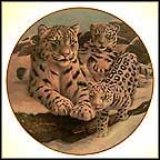 Snow Leopards Collector Plate by Gene Dieckhoner