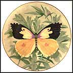 Colias Eurydice (Butterfly ) Collector Plate by Stanley Galli