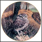 Watchful Eyes - Little Owl Collector Plate by Trevor Boyer