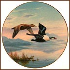 Flying In: King Eider Ducks Collector Plate by Darrell Bush