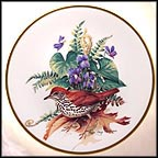 Wood Thrush Collector Plate by Roger Tory Peterson MAIN