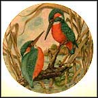 Common Kingfisher Collector Plate by G. Marks