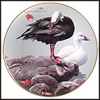 Snow Geese Collector Plate by Rod Lawrence