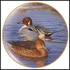 Pair Of Pintails Collector Plate by Trevor Boyer