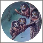 Beginning To Explore: Boreal Owls Collector Plate by Joe Thornbrugh
