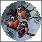 Forty Winks: Saw-Whet Owls Collector Plate by Joe Thornbrugh
