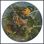 The Baltimore Oriole Collector Plate by Kevin Daniel