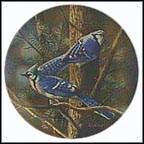 The Blue Jay Collector Plate by Kevin Daniel
