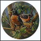 The Robin Collector Plate by Kevin Daniel