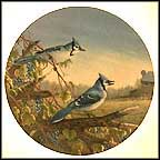 Blue Jays In Early Fall Collector Plate by Sam Timm