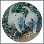 A Chance Meeting: White American Shorthairs Collector Plate by Amy Brackenbury