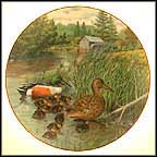 The Northern Shoveler Collector Plate by Bart Jerner