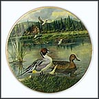 The Pintail Collector Plate by Bart Jerner