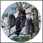 Treetop Trio: Long-Eared Owls Collector Plate by James Beaudoin MAIN