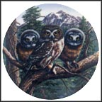 Vast View: Saw-Whet Owls Collector Plate by James Beaudoin MAIN