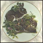 Cottontail Rabbits Collector Plate by Richard Timm