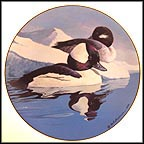 Buffleheads Collector Plate by Rod Lawrence