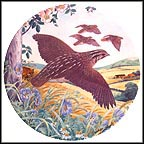 Quail On The Wing Collector Plate by Derek Braithwaite