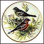 Chaffinch Collector Plate by Ursula Band