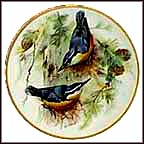Corsican Nuthatch Collector Plate by Ursula Band