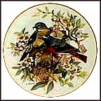 Redstart Collector Plate by Ursula Band