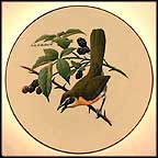 Yellow-Breasted Chat Collector Plate by Don Eckelberry