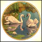 The Swan Collector Plate by James Faulkner