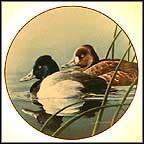 The Lesser Scaup Collector Plate by Neal Anderson