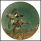 Mallards Collector Plate by Richard Plasschaert
