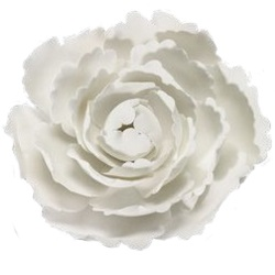 Gum Paste Briar Rose LARGE
