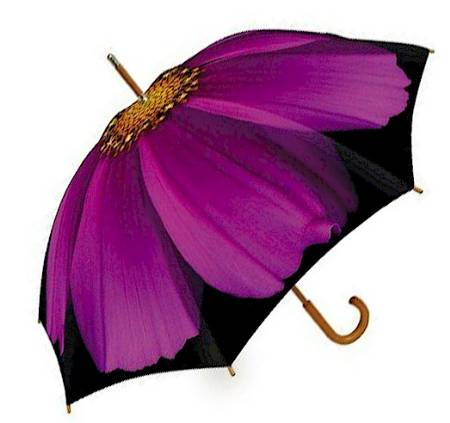Purple Cosmos Umbrella