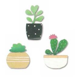 Succulents Magnets