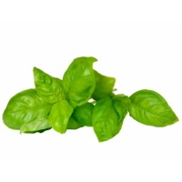 Basil Bunch, ea.