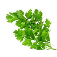 Organic Italian Parsley Bunch, ea.