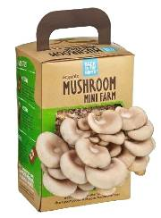 Back to the Roots Organic Oyster Mushroom MINI FARM   USDA Organic