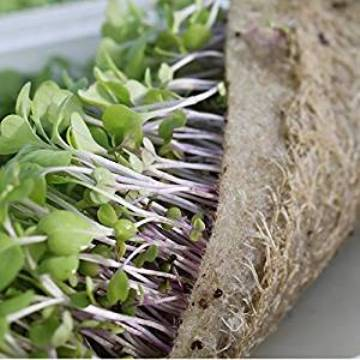 BioStrate Hydroponic Growing Felt for Wheatgrass, Microgreens, Sprouts and Salad Greens  Package contains 10 Felt Mats