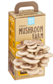 Back to the Roots Organic Oyster Mushroom Grow Kit  USDA Organic