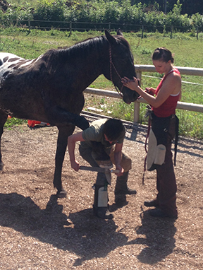 Ocala Hoof Care Course 2 for 1 Offer