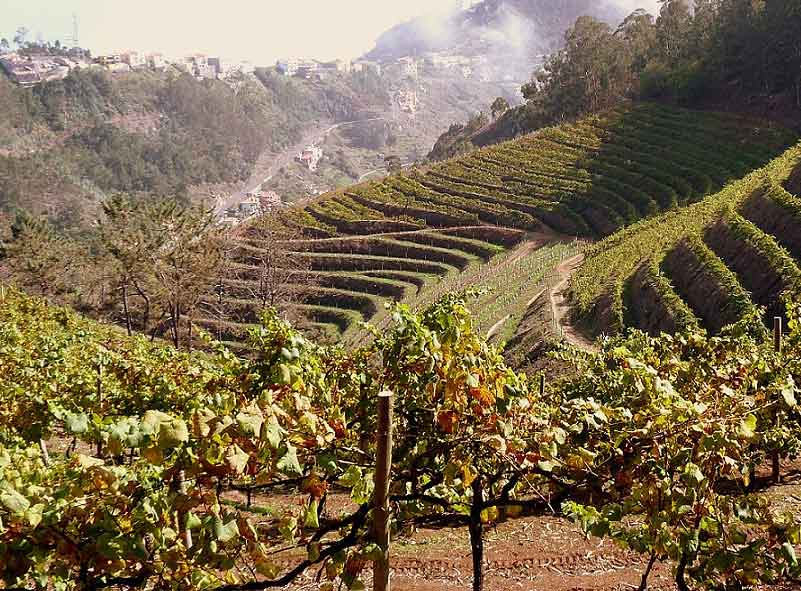 Portuguese Fortified Wine Tasting J Henahan of Hauz Alpenz, Tuesday, September 17th THUMBNAIL