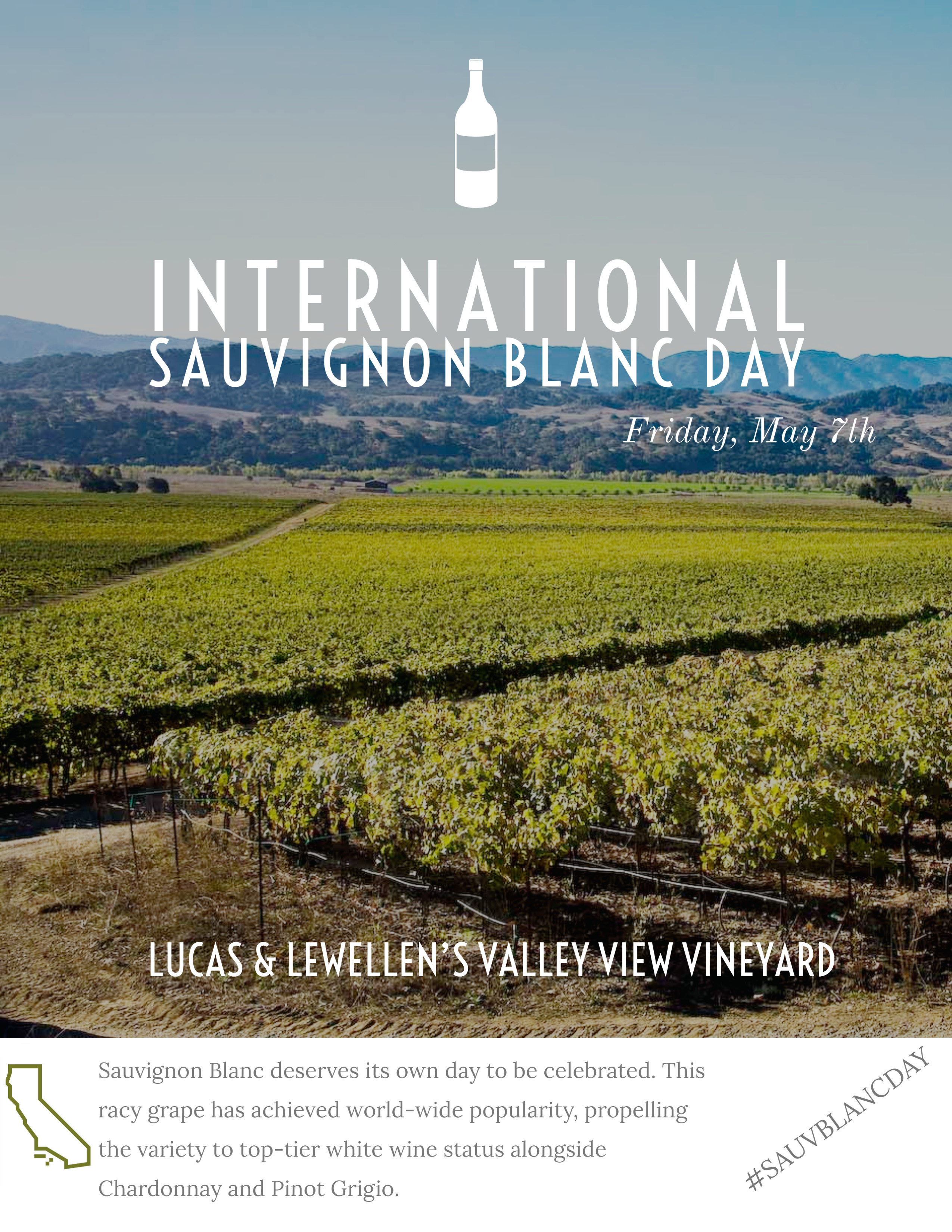 International Sauvignon Blanc Day half-case of Sauvignon Blanc THUMBNAIL