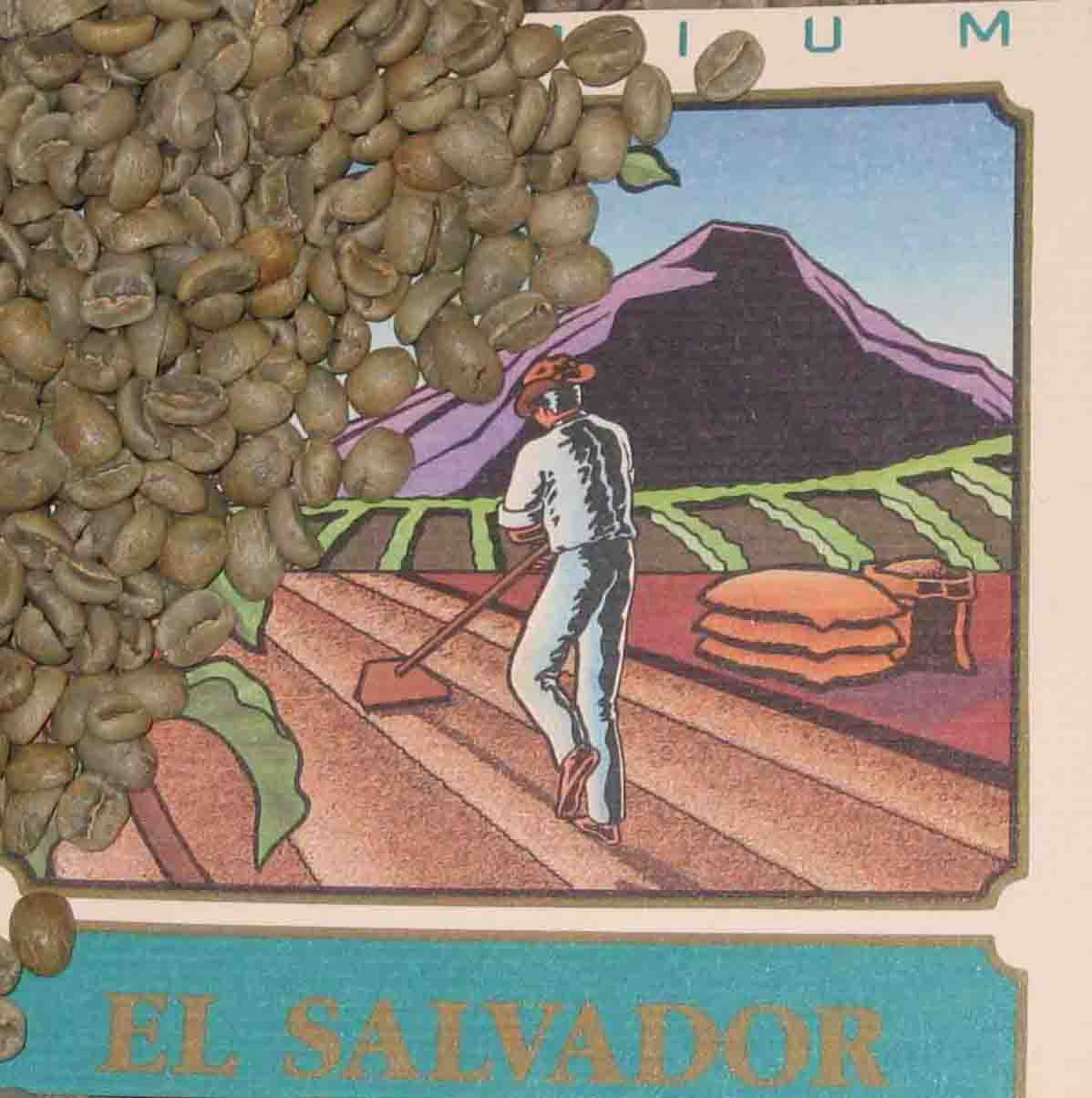 Green  Coffee El Salvador Natural Los Andes Coffee