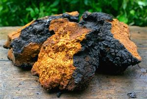 Chaga |Tinctures-Liquid Herbal Extracts & Benefits LARGE