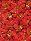 RJR Farmers Market #0460-1 - Strawberries Mini-Thumbnail