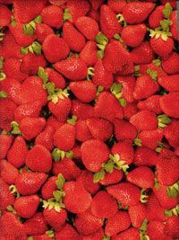 RJR Farmers Market #0460-1 - Strawberries