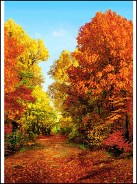 "Hoffman ""American Byways"" # P4326-Autumn – Fall Trees Panel"