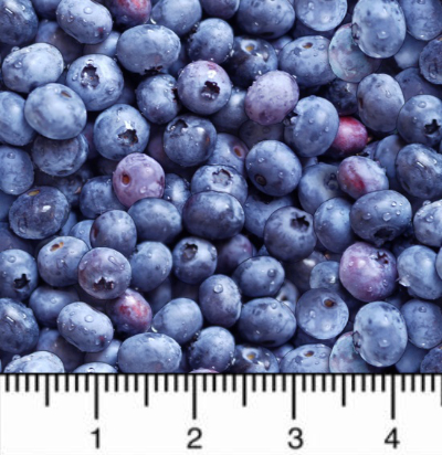 "Timeless Treasures ""Fruit"" # C1809 - Blueberries"