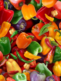 "Elizabeth's Studio ""Food Festival"" # 389-MULTI – Multi Colored Peppers"